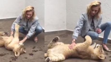 Rubik bawi się z lwem w Meksyku